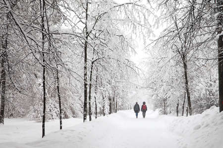 Snowfall in the park, snowy winter road, snow covered trees landscape. cold season weather concept. Standard-Bild