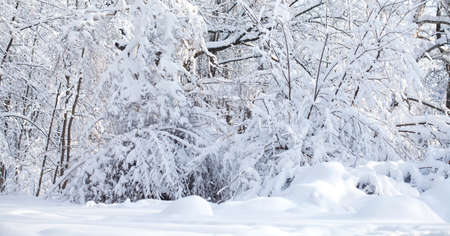 Snowfall in the park, winter weather scene, snow covered trees landscape Standard-Bild