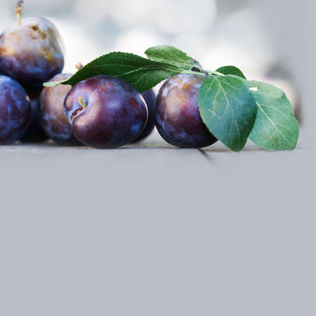 Ripe blue plums on wooden table. Farmers fruits still life photography, selective focus beautiful bokeh. copy space