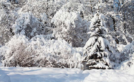 Winter forest landscape, cold weather scene. Snow covered trees Stock fotó