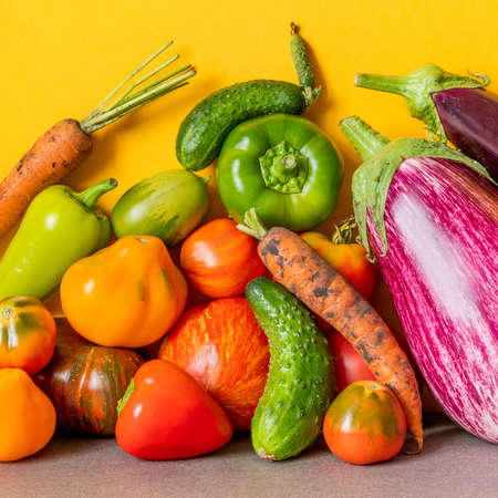 Organic vegetables still life scene. Farm aubergine eggplants, tomatoes of various grade, bell peppers, carrot and cucumber on a yellow gray background. Imagens