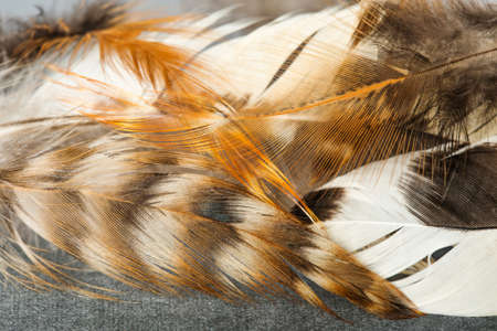 Bird feathers patterns texture macro view. Imagens
