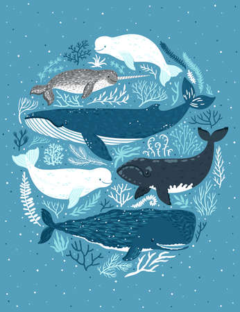 Vector set of whales. Illustration of marine mammals: narwhal, blue whale, beluga whale, white whale and sperm whale. Childish poster with sea animals ans seaweed.
