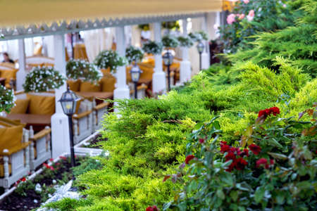 landscape design of green plants and flowers in a restaurant near the tables with lanterns under a canopy from the sun.