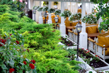 Landscape design on the summer terrace of the restaurant, the sharpness on the plants and in the background in the bokeh flower beds with flowers and lanterns.