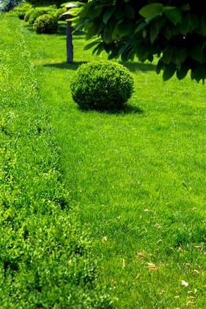 Vertical background with green plants from bushes and trees and with free copy space for text on the background of green grass.
