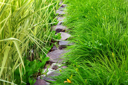 path from a decorative stone to a green plant from plants with elongated green leaves and reeds.