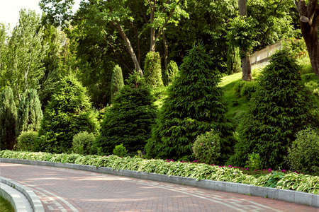 The pavement is paved with tiles with a curb in the park along a flower bed with flowers and evergreen plantings of thuja. Stok Fotoğraf
