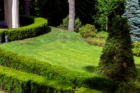 landscape design of a green meadow with a lawn and bushes planted around the boxwood hedge.