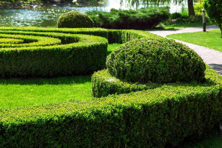 Landscaping boxwood hedge with a lawn and a walkway in the background a pond with water.