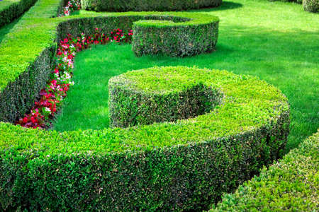 boxwood topiary planted with a flower bed pattern for flowers with red blossoms and a green lawn.