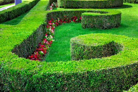 boxwood hedge with clipped bushes planted in a pattern between which grows a lawn with flowers. Stok Fotoğraf