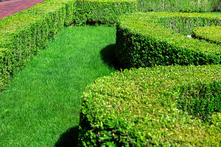 Garden with green lawn planted with trimmed bushes, gardening with sheared molded bushes. Stok Fotoğraf