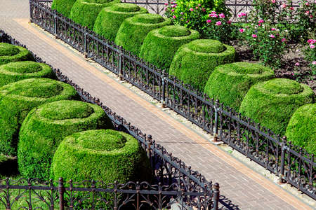 footpath from paving slabs and black iron fence with flowerbed boxwood hedge topiary round landscape design. Stok Fotoğraf