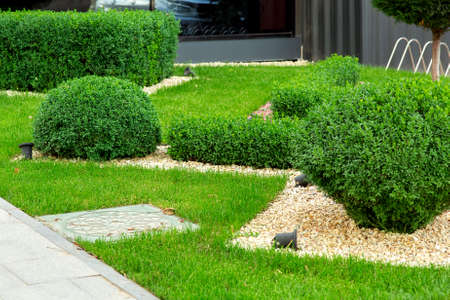 Landscaping with mulching with pebbles and boxwood bushes in the foreground a manhole, detail closeup.
