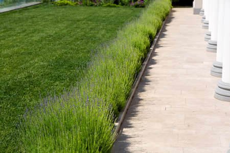 lawn with green grass and lavender blooming along the marble pavement with white columns, backyard details with architecture and plant.