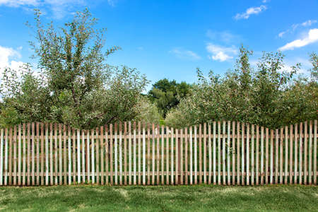 apple orchard behind a wooden fence and green lawn on the summer sunny day.