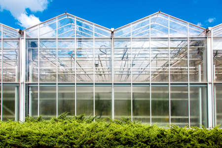 glass building agriculture greenhouse vegetable growing, year-round harvesting technology.