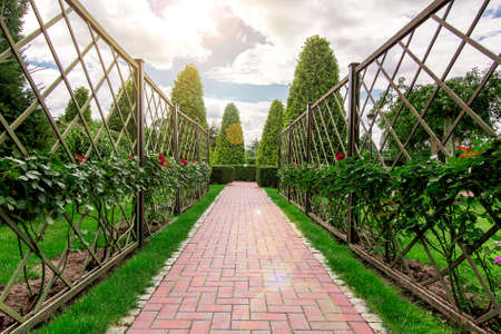 the alley in the rose garden turning into a path with a hedge of thuja from the clouds the sun shines.