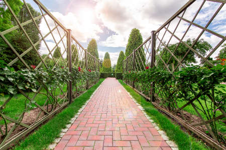 the footpath in the rose garden  with a thuja from background the clouds the sun flare. 版權商用圖片