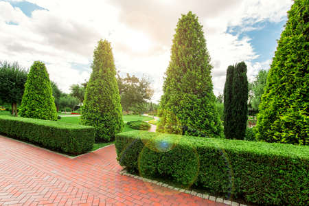 Park landscape design with footpaths and hedge of bush thuja and sun flare in the sky.