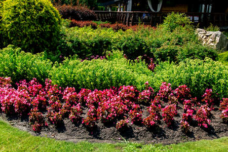 Landscaping flowerbed in the ground red flowers and green bushes on a sunny day. 写真素材