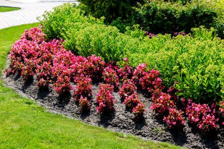 flowerbed in the ground red and green flowers on landscaping garden a sunny day. Stock fotó