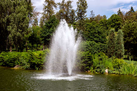 fountain in the pond on a sunny day in the park with green plants from deciduous and pine trees.