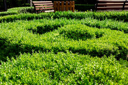 manicured boxwood bushes planted in a spiral shape in a park with benches on a sunny summer day.