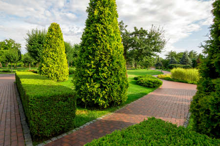 a park with boxwood hedge and evergreen thuja with winding sidewalks for walks among plants with clouds in the sky on sunny summer day.