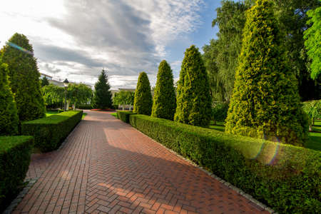 a pedestrian footpath from paving slabs in the garden with hedge of evergreen thuja and clouds in the sky with sun flare.
