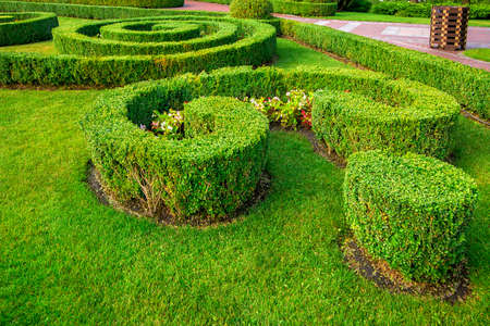 a garden landscape design of a hedge of boxwood bushes growing with patterns with green lawn and flowers on a summer day.