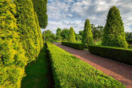 pedestrian walks alley from paving slabs in the garden with hedge of evergreen thuja with sunny day and  clouds on the sky. Stok Fotoğraf