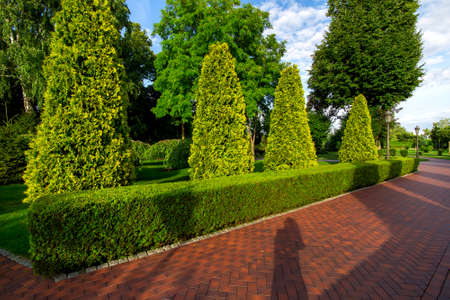 pedestrian footpath from paving slabs in the garden with hedge of evergreen thuja and tall arborvitae trees with clouds in the sky. Stok Fotoğraf