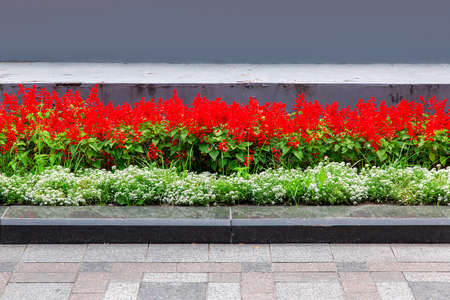 a flower bed with red and white flowers behind a granite curb at the pedestrian sidewalk and stone tiles.