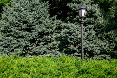 Iron lamp post with a lantern in retro style in the park among the evergreen bush and coniferous trees on a sunny summer day.
