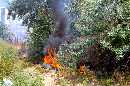 a fire in the nature among the trees burns with a bright flame a car tire and raises clouds of black smoke.