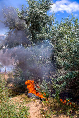 a fire among the trees of olives a car tire is burning, throwing black clouds of unstable emissions into the sky.