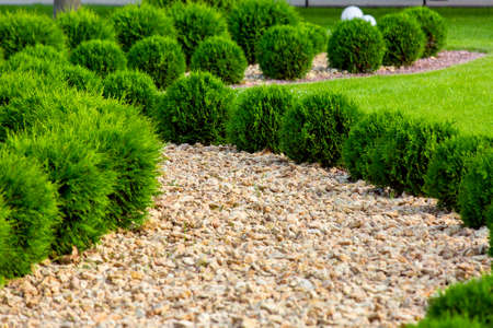 Landscaping of a backyard garden with ornamental growth thuja bushes by yellow stone mulch way on a day summer park details, nobody.
