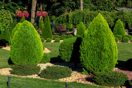 Landscaping of a backyard garden with evergreen conifers and thuja by yellow stone mulch in a summer greenery park with decorative landscape design illuminated by summer sunlight, nobody. Zdjęcie Seryjne