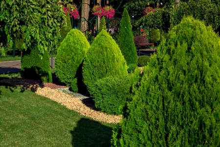 Landscaping of a backyard garden with evergreen conifers and thuja by yellow stone mulch in a summer greenery park with decorative landscape design and lawn lit by sunlight, nobody.