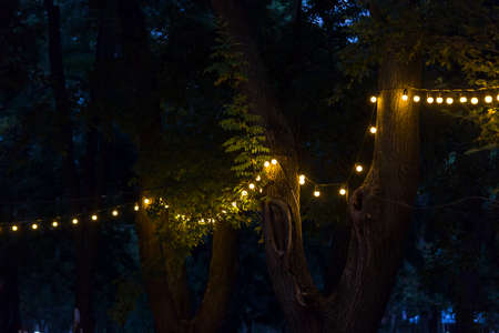 a garland of light bulbs glowing with warm light on the branches of trees at the evening party, closeup details festive decor, nobody.