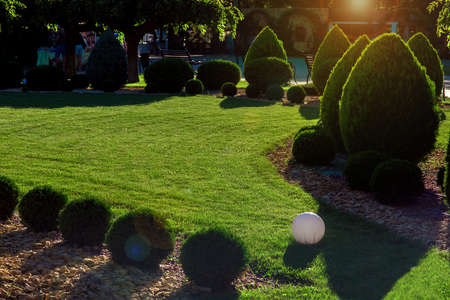 clipped thuja bushes with yellow stone mulching on a green mowed lawn with sphere ground lantern in a park in the backyard illuminated by the evening sunset, green nature environment, nobody. Zdjęcie Seryjne