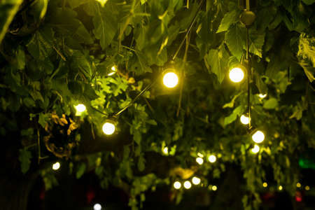 garland of light bulbs glowing with warm light suspended from tree branches in backyard garden with festive decor, closeup new year night party details, nobody Zdjęcie Seryjne