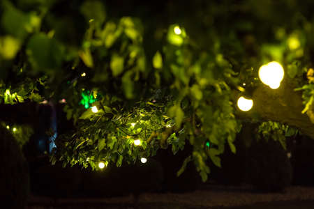 garland of light bulbs glowing with warm light suspended from tree branches with green leaves in backyard garden with festive decor, closeup holiday night party details, nobody