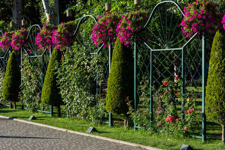 alley in park of stone tiles along a backyard landscape with arborvitae and climbing roses on an iron fence in a garden with plants lit by sun light, nobody.
