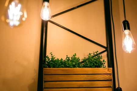 pendant edison bulbs in a cafe with wooden pots with green plants, eco friendly interior style electric lighting close-up of glow details, nobody.