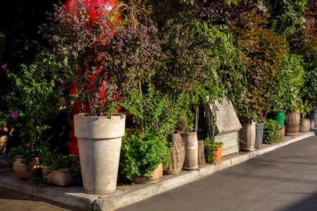 green plants in flowerpots on a walking sidewalk on a sunny summer day, a backyard hedge of assorted greenery. Eco friendly cafe lit by sun light, nobody.