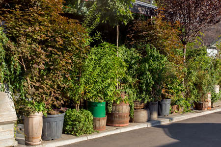 green plants in flowerpots on a walking sidewalk on a sunny summer day eco turism, a backyard hedge of assorted greenery. Eco friendly restaurant lit by sun light, nobody.