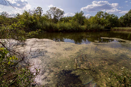 wild river in the forest with green trees and water thickets in sunny summer weather ecological reserve, nobody. Stock fotó